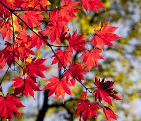 10月の和歌山は美しい紅葉のはじまり