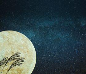 中秋の名月を優雅に演出する伝統の月見生菓子